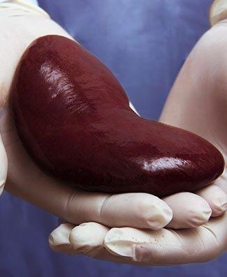 live organ transplant